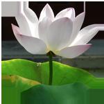 Buddhist himalayan bone adjustment