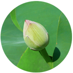Buddhist siddhi energy healing
