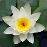 Buddhist healing Tibetan cranial therapy