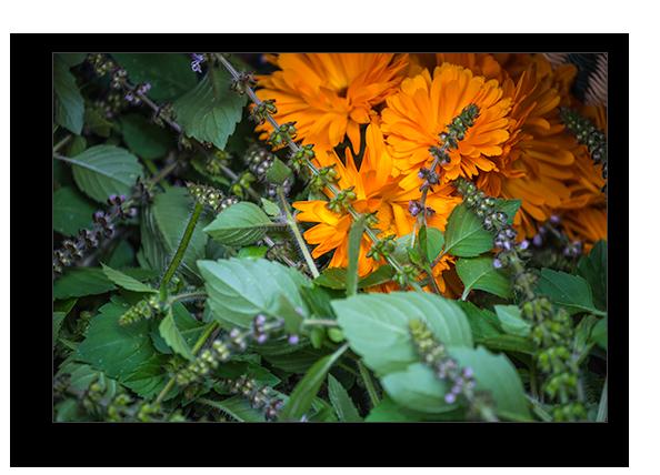 medicinal herbal remedies -dried herbs