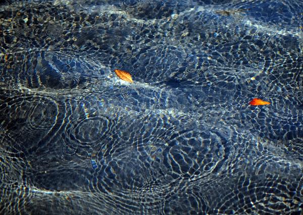 ripples of karma