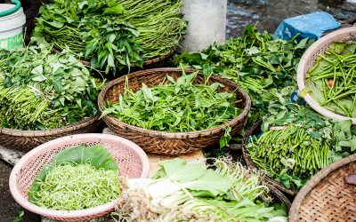 8 Great Herb Blogs for Beginners