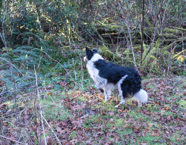 dog in the nettle patch