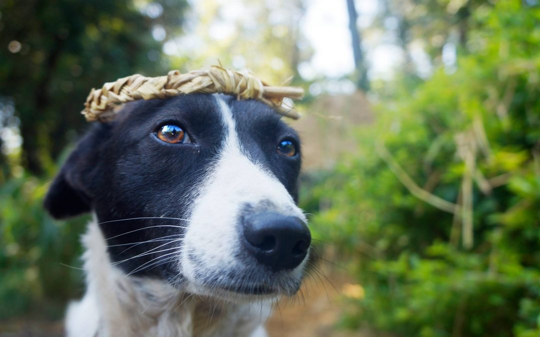 healing kennel cough with herbs