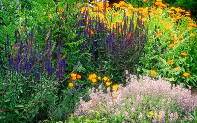 7 Amazing and Versatile Medicinal Herbs Blooming in My Garden Now